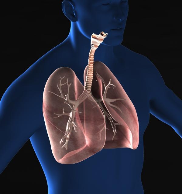 クリルオイルと低用量アスピリンの組み合わせは、ラットで実験的に誘発された珪肺症を軽減します:NF-κB/TGF-β1/ MMP-9経路の役割。